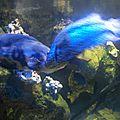 Aquarium de limoges (87)