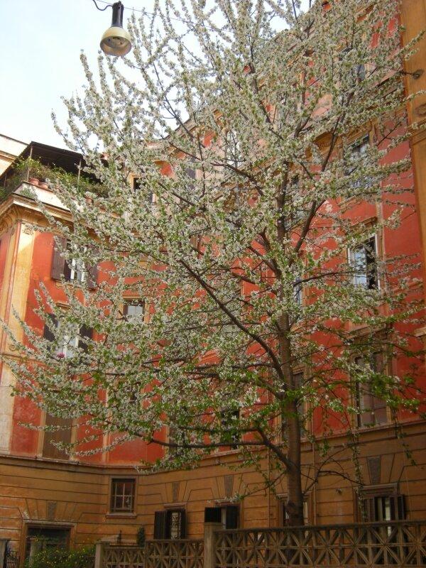 Rome avril 2009 096