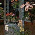 Orchiflore 2008 - Hall des expositions Parc floral de la Source à Orléans