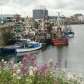 Howth, le port