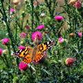 Butterfly (44)