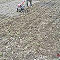 Plantation des pommes de terre