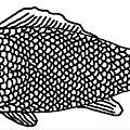 Chevaux mangeurs de poisson à Dunkerque