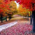 Vous avez dit automne ?