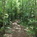 Sous bois dans Woodland
