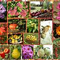 L'automne et ses <b>couleurs</b>