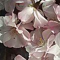 Les élixirs de Floral'Box