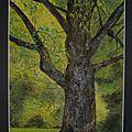 Un arbre, des glands et une pensée...