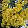 <b>Bouquet</b> du week-end n°2