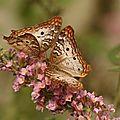 Histoire de Coco Papillo, le papillon qui donna des ailes à tous les papillons - Annie Rouault