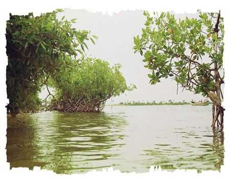 SeckasystemeMangrove-Bolong_rs