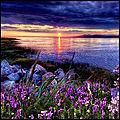 Image du jour - la beauté est dans la nature...