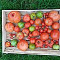 Tomates de Fin Novembre