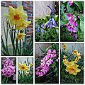 Le jardin a repris des couleurs