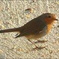 oiseaux_08