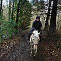 Balade à cheval dans la forêt P1080245