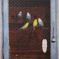 12- Huile sur toile, 80 x 60, les pérruches