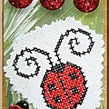 Coccinelle(d'Ines)