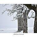 Ambiance hivernal