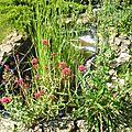Mon jardin cet été!