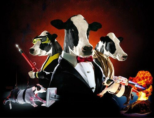 James Bond cows