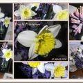 Mon jardin fête le retour du printemps