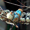 L'europe abrite 421 millions d'oiseaux de moins qu'il y a 30 ans.