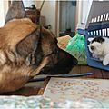 Délia, Berger Allemand menant une (belle) vie de chien