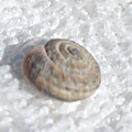 Photos d'insectes et d'<b>escargot</b>