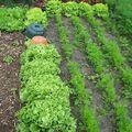 Salades - 12/09/08