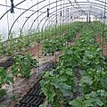 Les légumes d'été bio et locaux, c'est maintenant avec les paniers de regain ! inscriptions toujours ouvertes (màj 11/5)