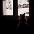 Ce n'est pas un temps à laisser un chat dehors...