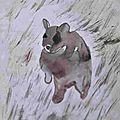 Lavis encre - Wombat espèce animal Australie