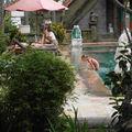 PADANG BAI: Hôtel PURI RAI, une masseuse à la piscine