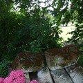 hortensias, 01/07/2007