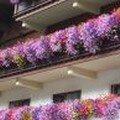 Balcons fleuris à St ANTON