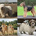 L'histoire évolutive du <b>chien</b> : entre mystères et controverses