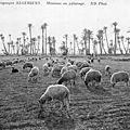 le cousin - Pour la Cathédrale de Reims - Lock-Out du Havre- Sur le front polono-bolcheviste - Les moutons algériens.