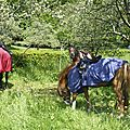 balade à cheval médiévale - Abbaye de Hambye (227)