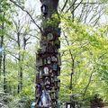 Rannée, le Chêne de la Vierge
