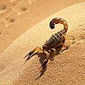 Scorpion - maintenu dans la personnalité