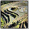 Guilin – les rizières de Longji