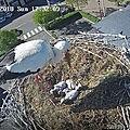Webcam de