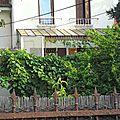 A la cueillette des feuilles de vigne