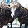 Petits moutons, petits écheveaux