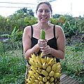 Banane, etc...