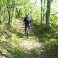 Forêt de la Grésigne