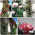 Jardin fin mai 2018 (10)