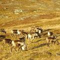 17-10-08 Sortie Montagne et rennes (127)