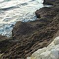 Banquette de posidonie littoral méditerranéen 2